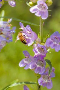 A bee sitting on a purple flower