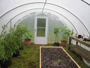 Inside of hoop house with plants