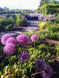 Garden with shrubs and purple flowers