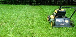 Lawn being mowed