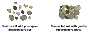 Diagram of healthy and unhealthy soil